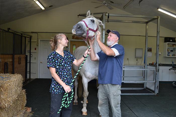 Quality Equine Care